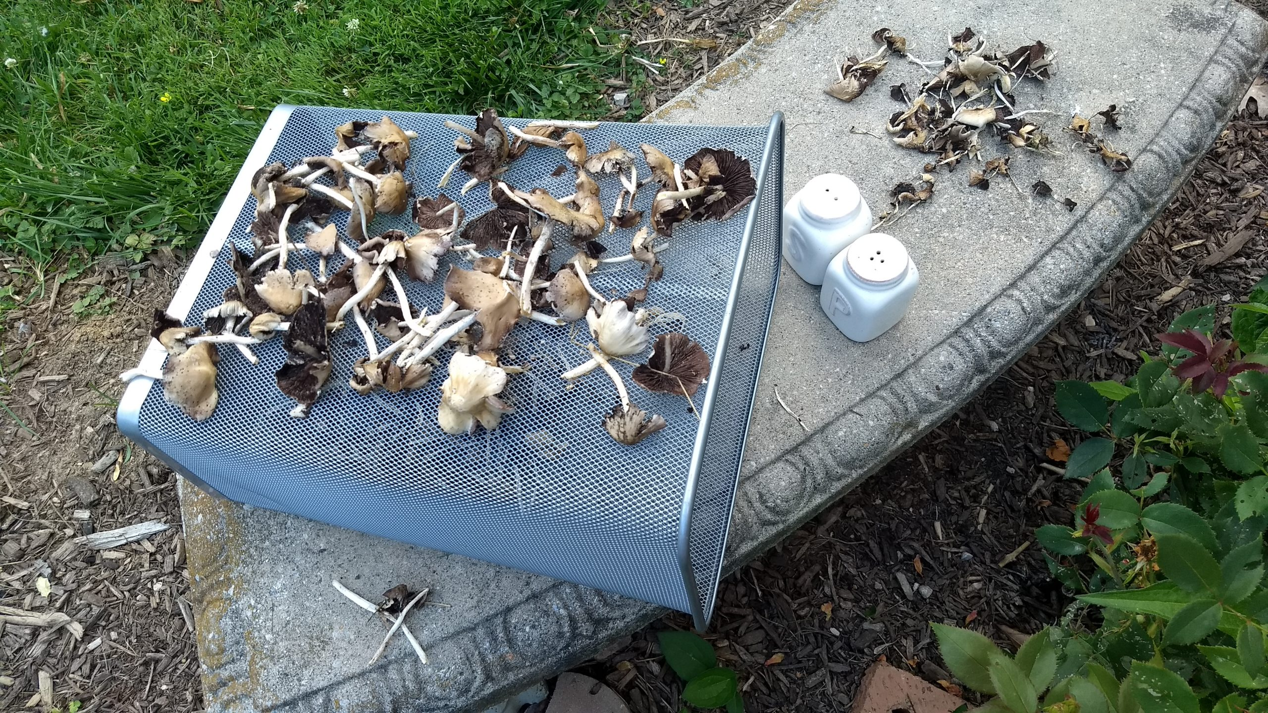 Drying Rack Garbage Can for Psathyrella with Salt and Pepper